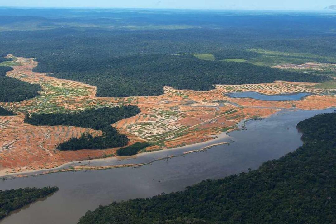 Am Rande des Juruena-Nationalparks im ...Regenwald ist die Entwaldung sichtbar.  | Foto: Isaac Risco-Rodriguez