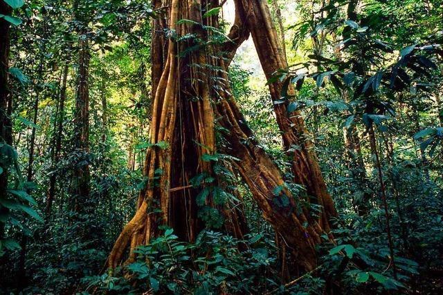 Wie können Urwälder geschützt werden?