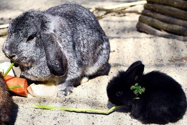 Ob unsere Katze sich wohl mit Kaninchen verträgt?