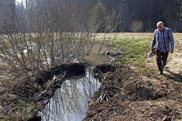 Biber leistet Naturschutzarbeit