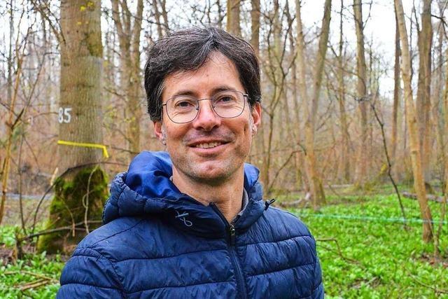Kampf gegen den Pilz: So wollen Forscher den Bestand der Esche retten