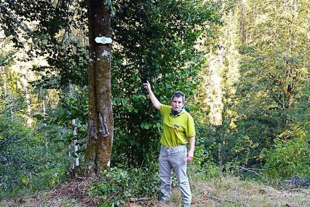 Schwarzwaldverein sucht Paten für Wanderwege