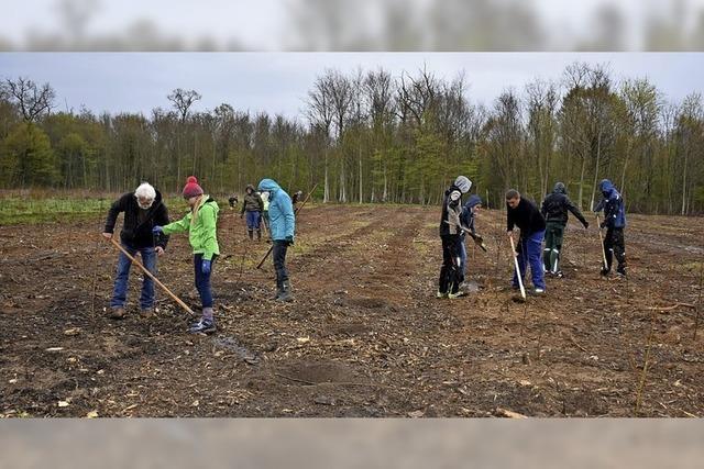 2400 Bäume gepflanzt
