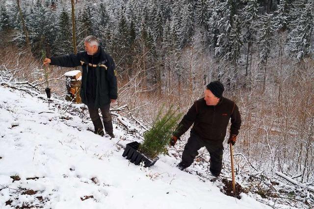 110.000 Bäume werden im Kanderner Forst gepflanzt