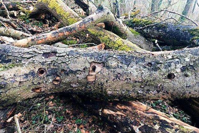 Baumfällungen am Maienbühl in Lörrach sorgen weiter für Kritik