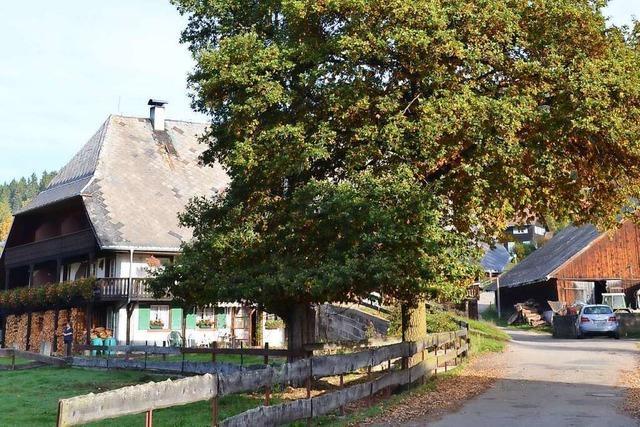 Der Riegelhof in Lenzkirch hat zwei ungewöhnliche Hofbäume