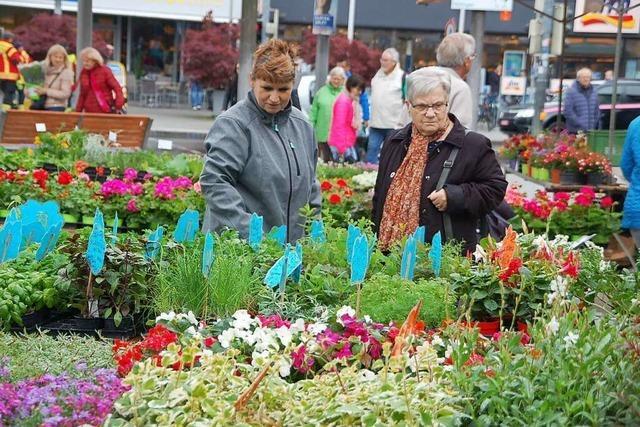 Geranienmarkt in Rheinfelden wird zum zweiten Mal abgesagt