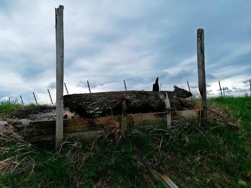 Völlig zerstört wurde das Waldbienenhotel bei einem Brand am Freitag.    Foto: Gemeinde Binzen