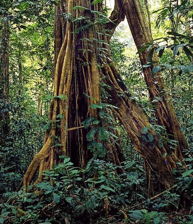 Regenwald in Borneo  | Foto: DPA Deutsche Presse-Agentur GmbH