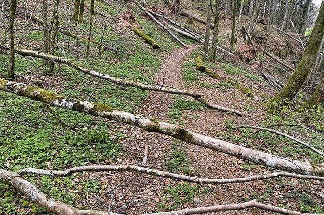 Das Schwarzwaldwegli ist wieder frei geräumt