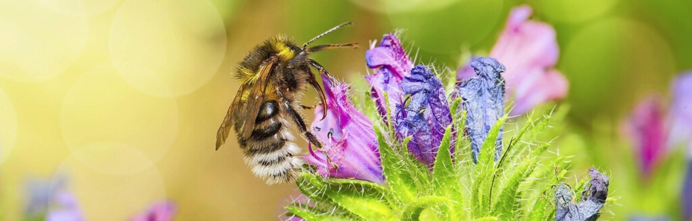 Was der Natur hilft, bringt auch den M...nd der PWV wollen deshalb kooperieren.    Foto: Sabine Dietrich
