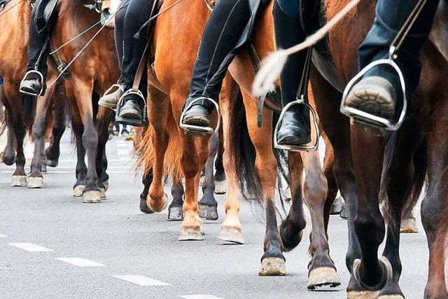 Die Pferdesteuer ist in Rheinfelden vorerst vom Tisch
