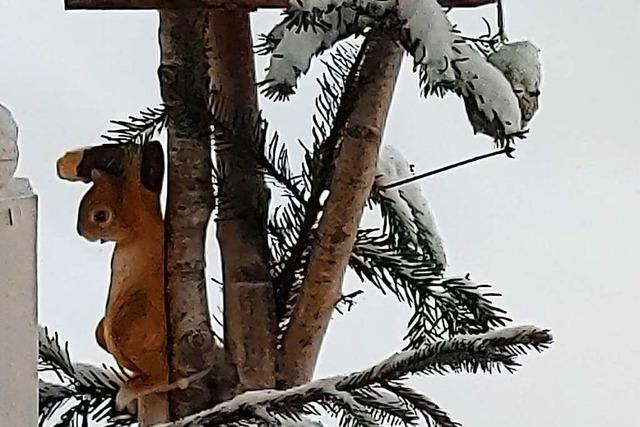 Ein fleißiges Eichhörnchen in Bernau