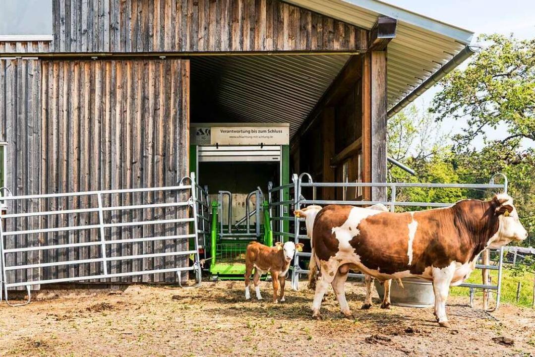 Das Schlachthaus kommt per mobiler Einheit zum Tier – und nicht umgekehrt.  | Foto: Julian Liewer