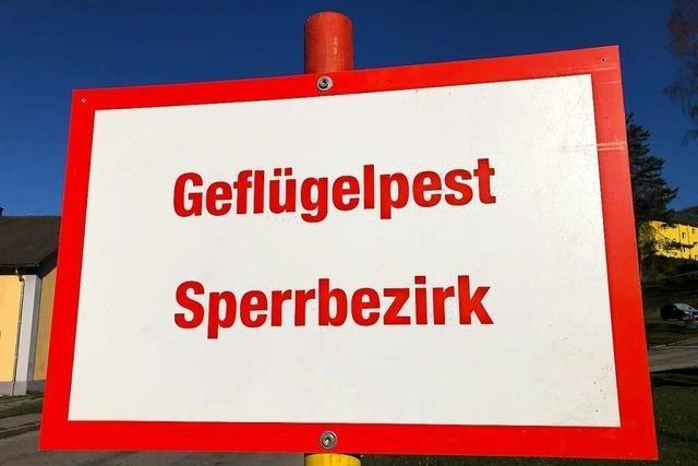 Stadtverwaltung ermahnt die Halter in Freiburg