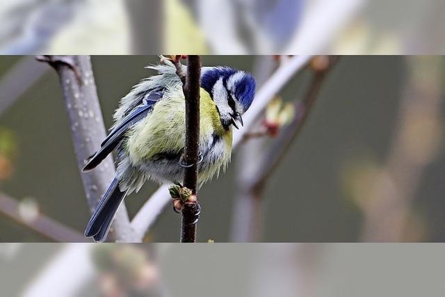 Fröhliches Leichtgewicht im Naturschutzgebiet