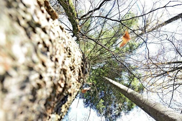 Zehn-Jahres-Planung für den Waldumbau beschlossen