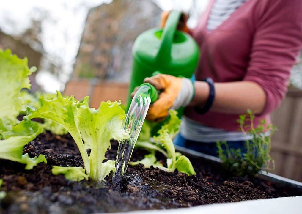 Gärtnern hilft zu entspannen.    Foto: Frank Rumpenhorst