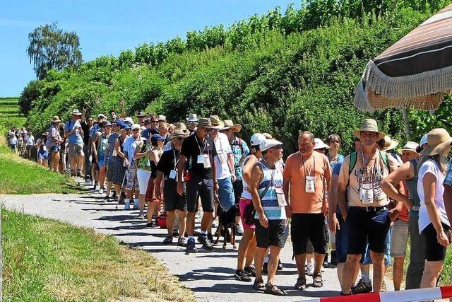 Kulinarische Weinwanderung in Oberrotweil abgesagt