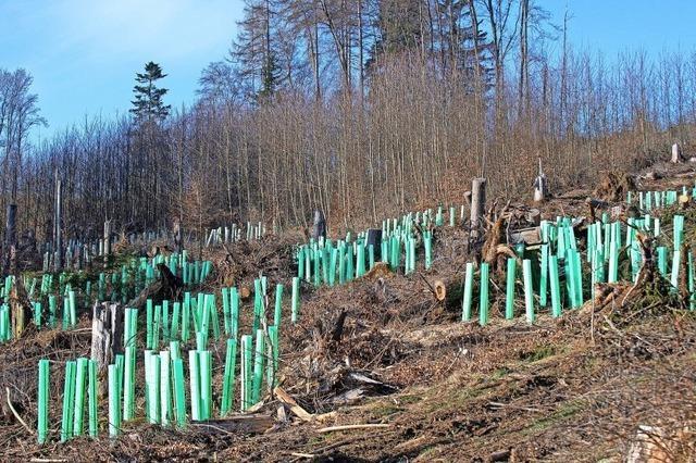 Klimaresistenter Wald ist das Ziel