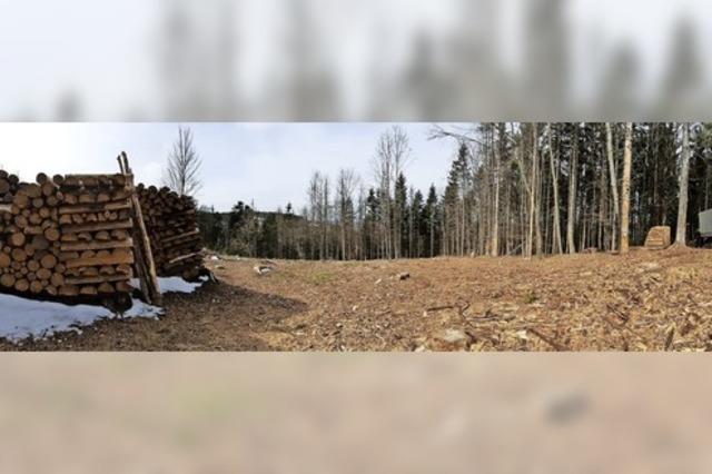 Zehn-Jahres-Fahrplan für Wehrer Wald