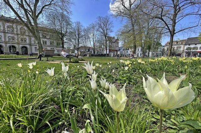 Die Tulpen blühen schon um die Wette