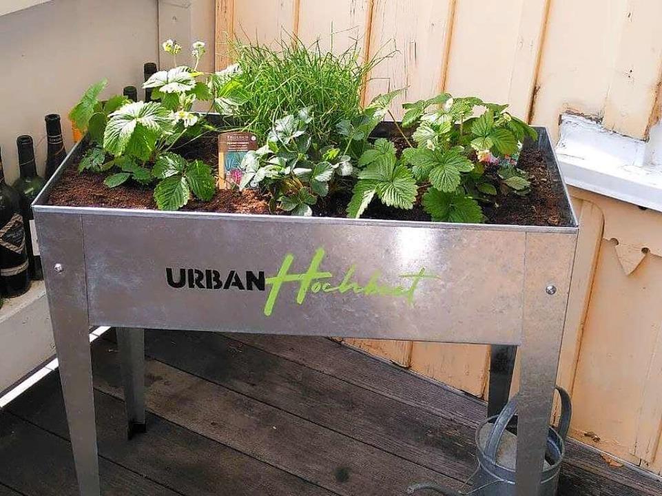 Das Urban Hochbeet  | Foto: Anna Castro Kösel