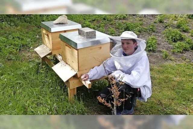 Bienen in großer Not