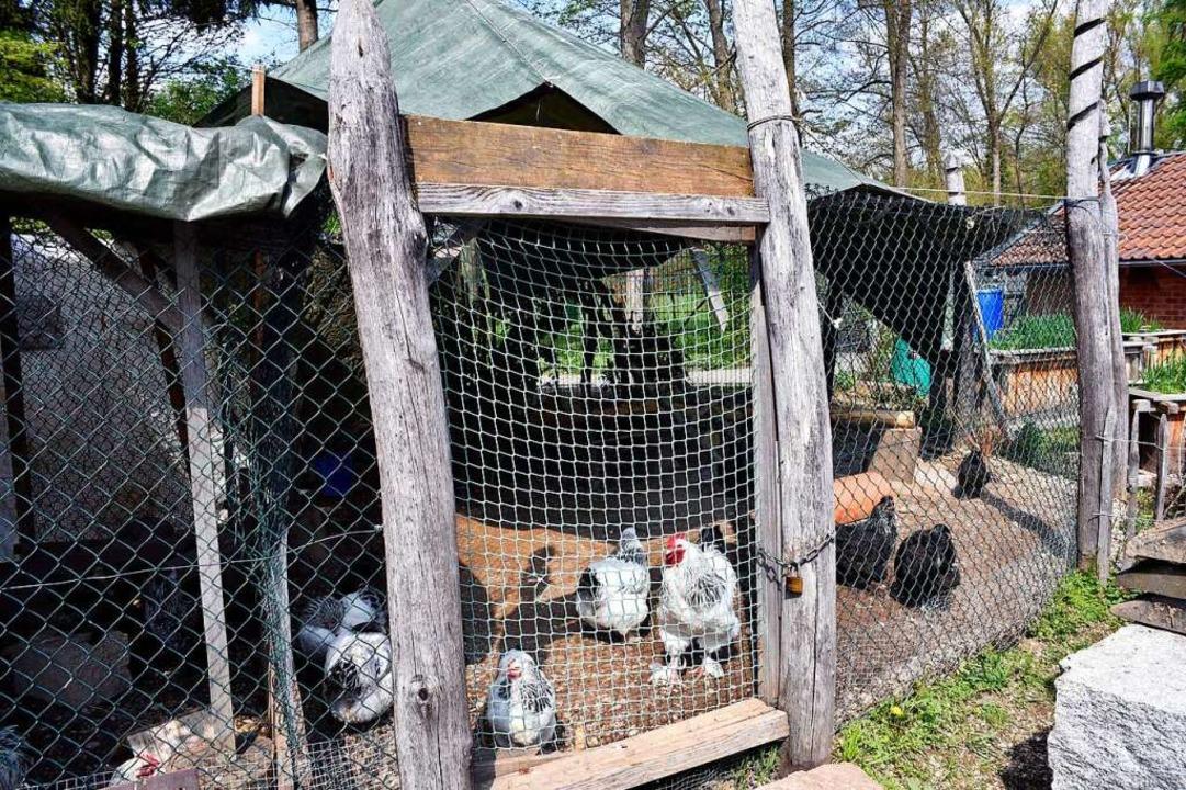 Auch beim Abenteuerspielplatz Weingarten mussten die Hühner unter Dach und Fach.  | Foto: Thomas Kunz