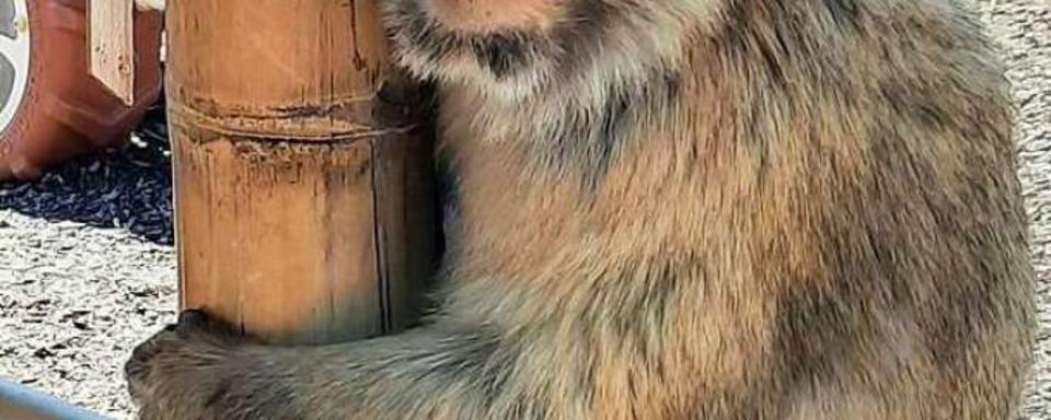 Affen an der Bundesstraße