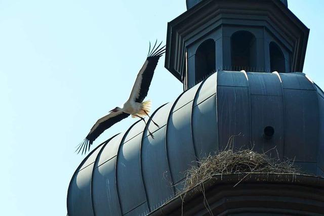 Storchenpopulation in Rheinhausen hat erheblich zugenommen