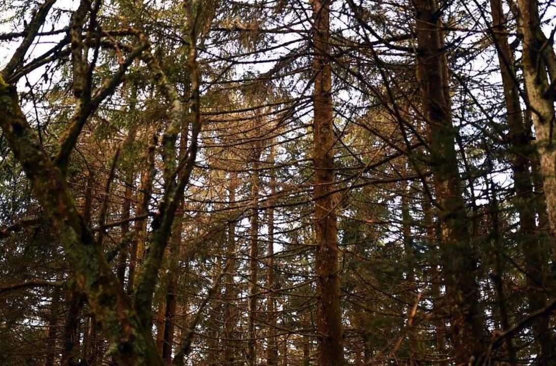 Blick in ein Waldstück im Nordschwarzwald  | Foto: Uli Deck (dpa)