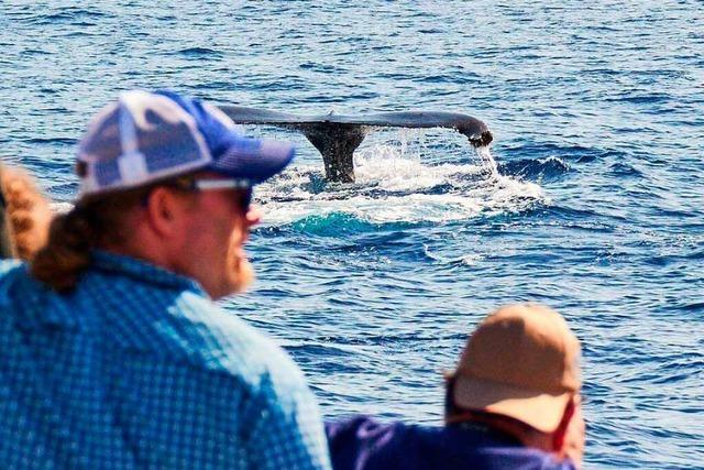 Walbeobachtung auf Teneriffa: Ja – aber mit Respekt für die Tiere