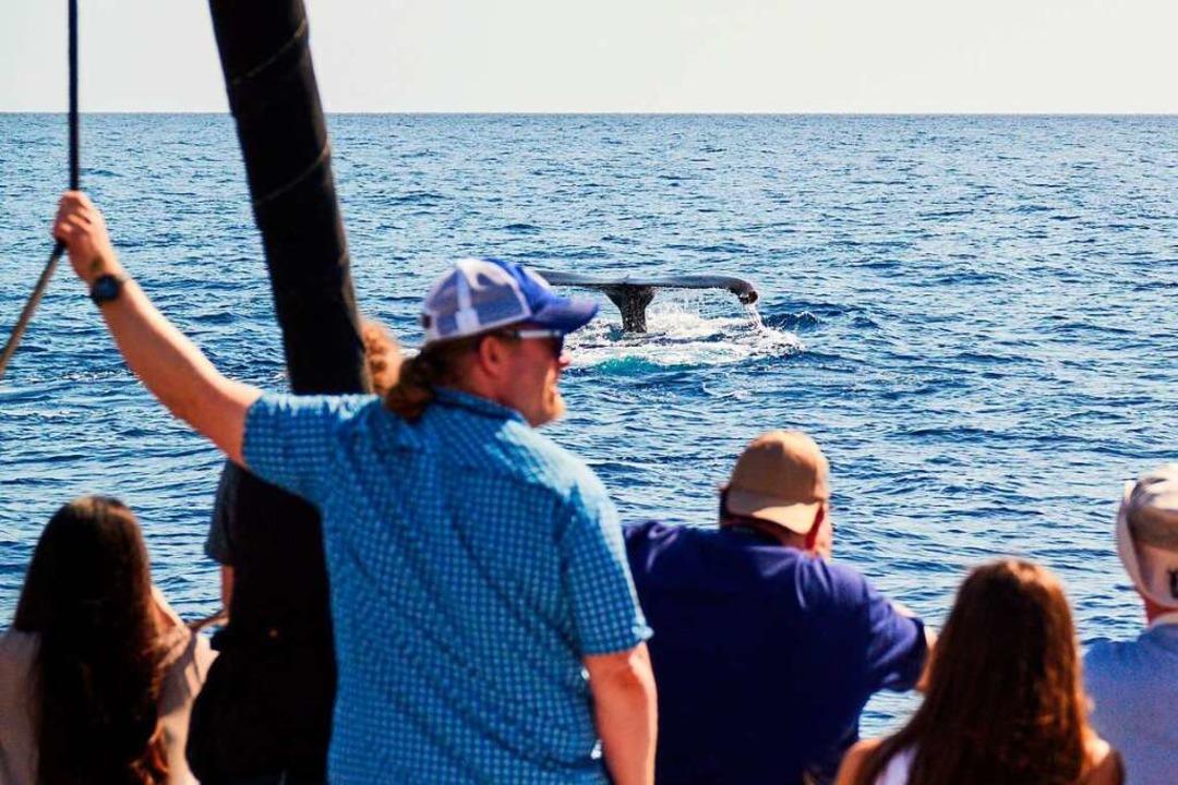 Der Wal- und Delfintourismus ist nicht...eriffa  eine lukrative Einnahmequelle.  | Foto: Peter Schatz, via www.imago-images.de