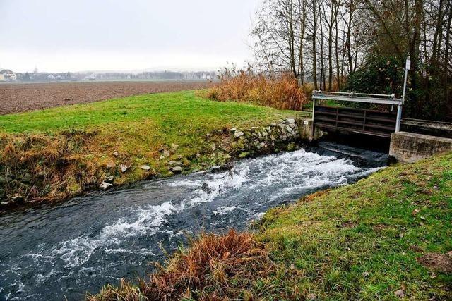 Beim Polderbau zwischen Breisach und Jechtingen zeichnet sich eine Einigung ab