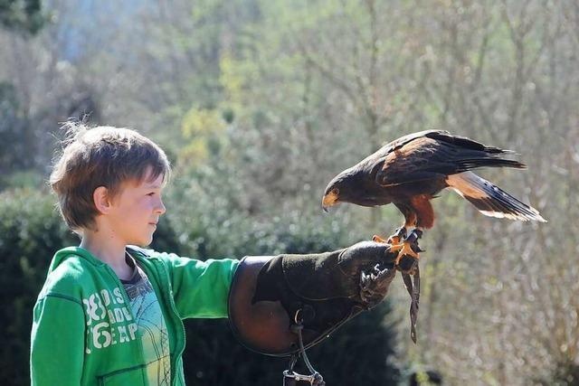 Im Vogelpark Steinen gibt es nicht nur Vögel hautnah zu erleben