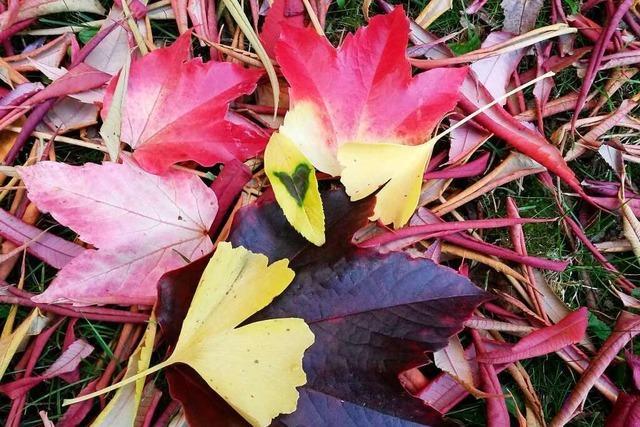 Herbstlaub-Farbfeuerwerk in Emmendingen