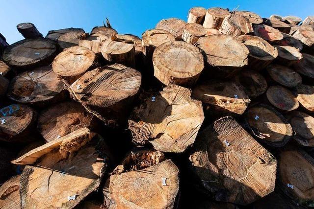 Rasanter Wandel im Wald ist Folge des Klimawandels
