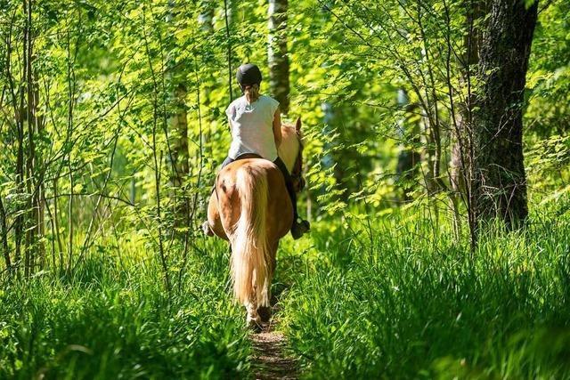 Auch Reiter sorgen in den Wäldern des Landkreises Lörrach für Konflikte