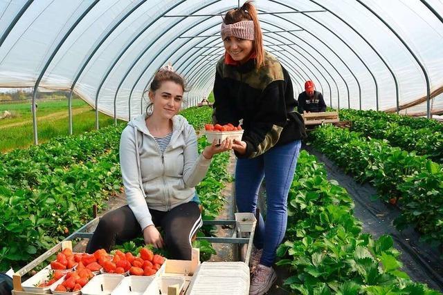 Obstgroßmarkt Oberkirch setzt Reformkurs fort