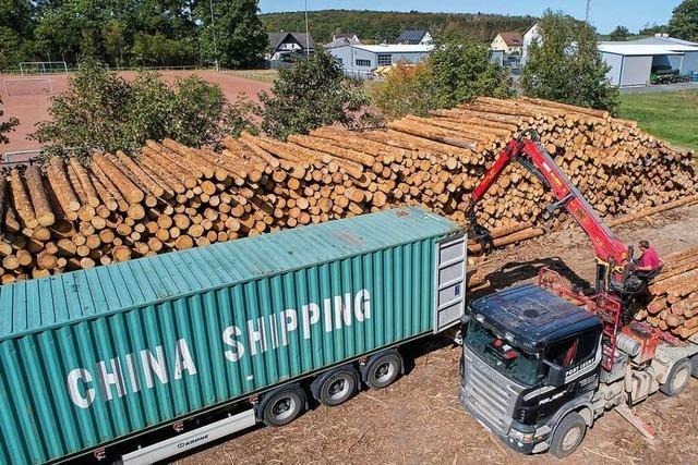 Steigende Holzpreise erreichen Waldbesitzer im Landkreis noch nicht