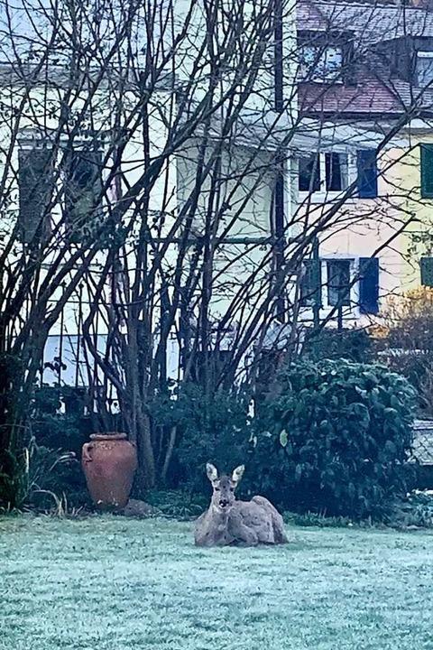 Im Garten ist's schön, findet auch dieses Reh.    Foto: Margit Anhut