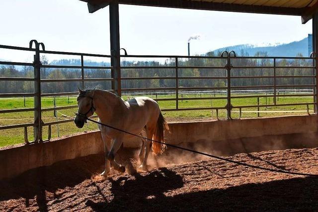 Longierhalle für Pferde darf in Kirchzarten gebaut werden
