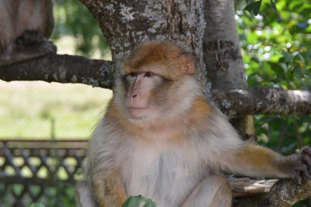Freizeitpark Tatzmania will sein Affengehege sicherer machen