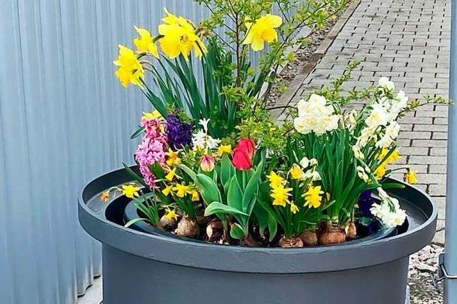 Zwölf Blumenkübel erwachen in Schopfheim aus dem Dornröschenschlaf