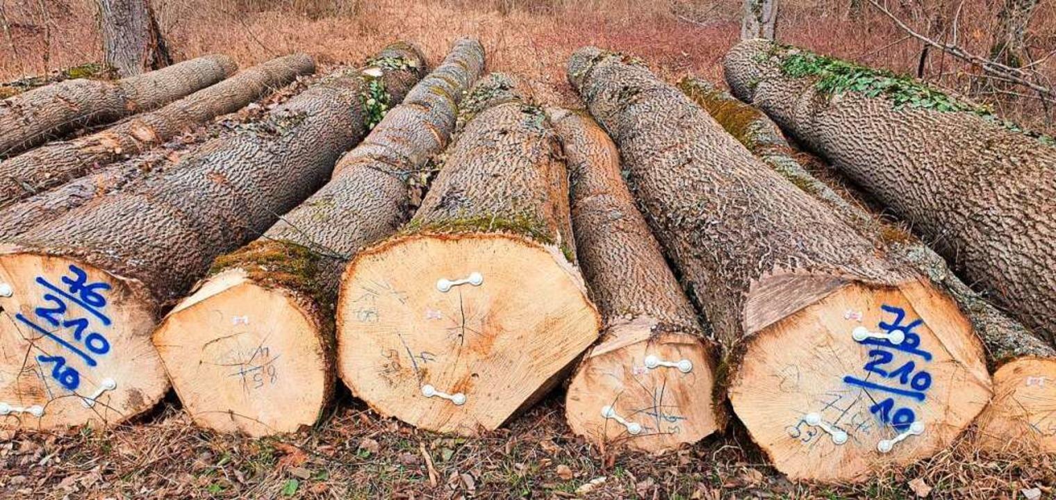 Viel Holz ist in den Wäldern angefalle...ld für die Zukunft fit gemacht werden.  | Foto: Julius Wilhelm Steckmeister