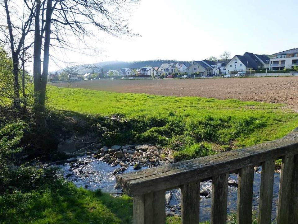 "Jetzt noch Acker, künftig Wohngebiet: ...n-Holzing-Straße"" in Bollschweil  | Foto: Andrea Gallien"