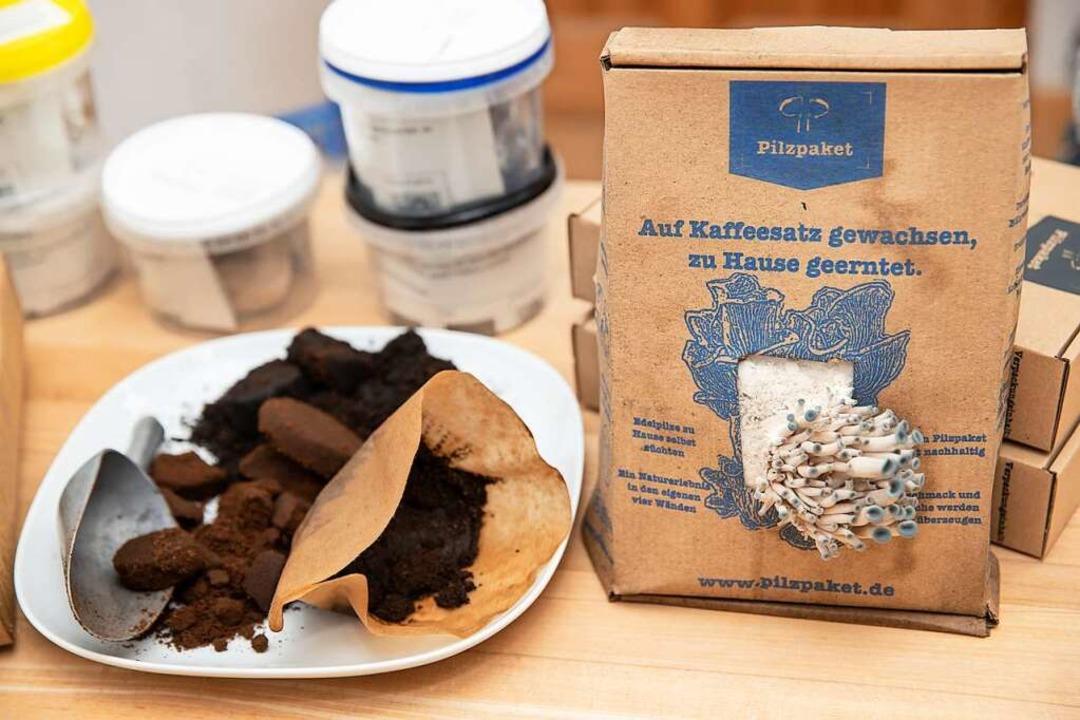 Taubenblaue Austernseitlinge wachsen a... bestehend aus Kaffesatz mit Pilzbrut.  | Foto: Daniel Karmann (dpa)