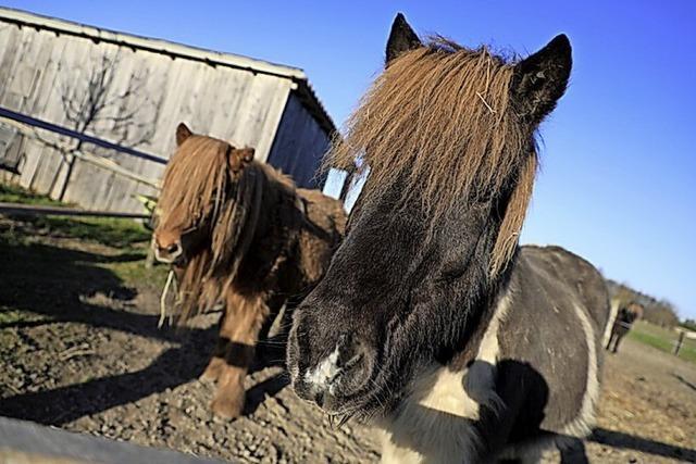 Bauherr darf Pferde halten