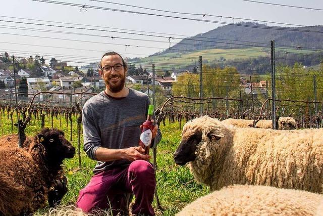 Warum Schafe im Weinbau nützlich sein können